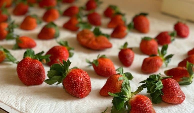 strawberries drying on towels
