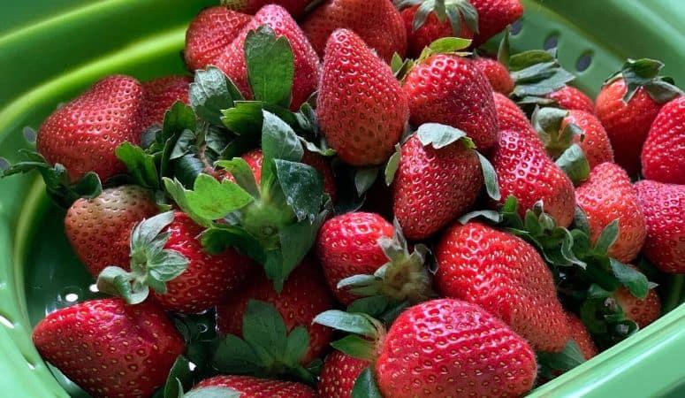 fresh bright red strawberries